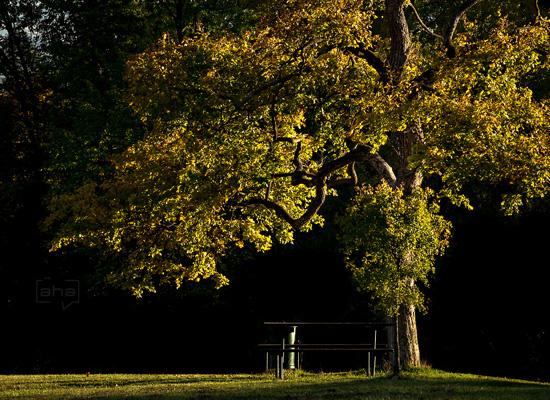 Baum mit herbstlich bunten Blättern, Sitzbank und Tisch