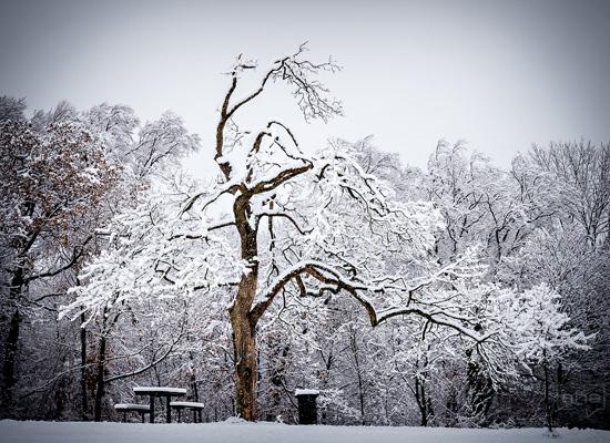 Winterlandschaft mit knorrigem Baum